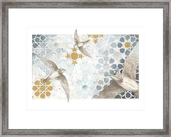 Swifts Of Cihangir Framed Print