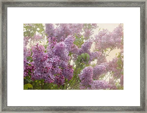 Swimming In A Sea Of Lilacs Framed Print