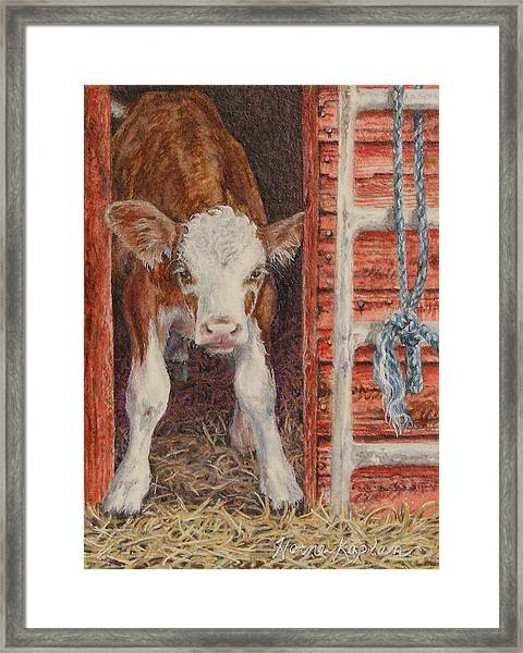Swiss Calf, Got Milk? Framed Print