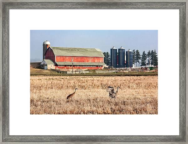 Swiss Cranes Framed Print