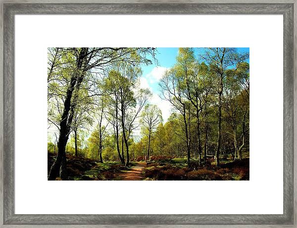 Swivel Framed Print