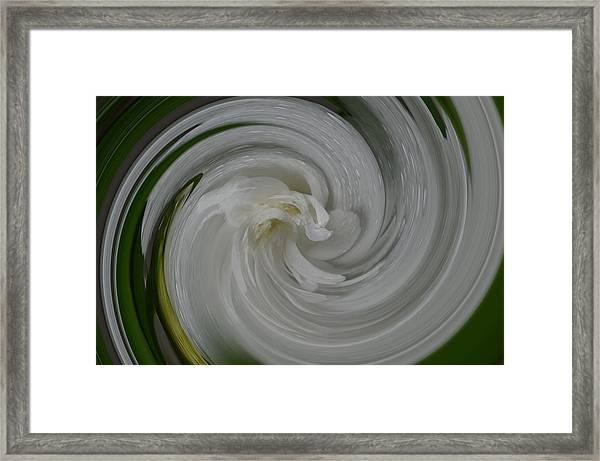 Swrling Rose Framed Print