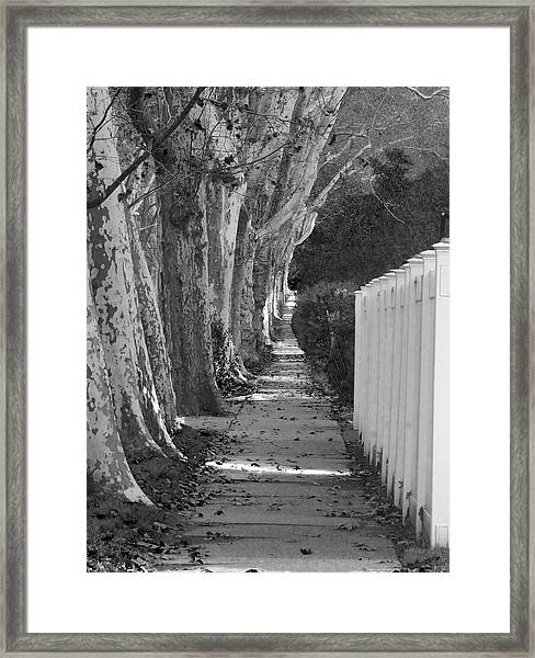 Sycamore Walk-grayscale Version Framed Print