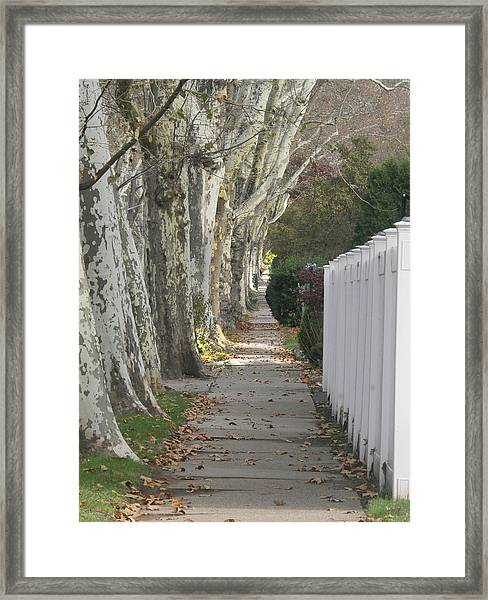 Sycamore Walk Framed Print