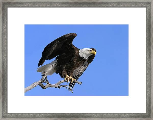 Symbol Of Freedom Framed Print