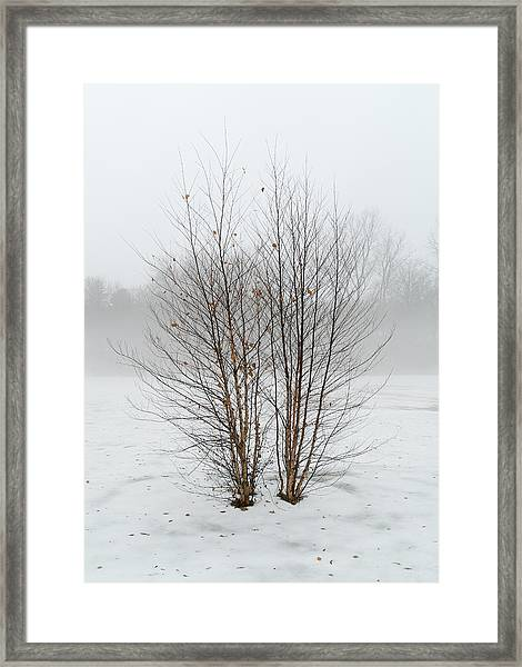 Symmetrees Framed Print