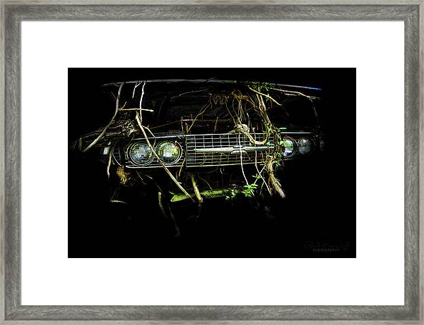 Framed Print featuring the photograph T-bird Tree Bird by Glenda Wright