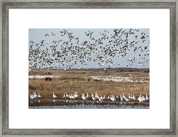 Take Flight 1 Framed Print