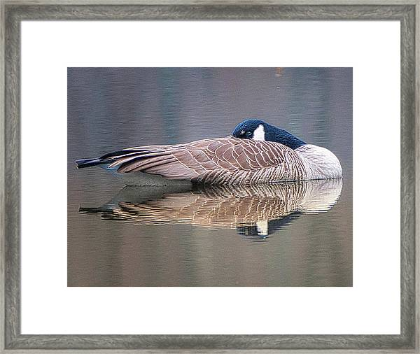 Taking A Nap Framed Print