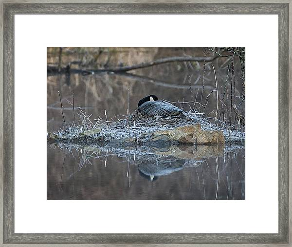 Taking A Rest Framed Print