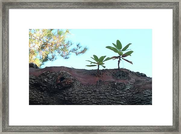 Taking A Walk Framed Print