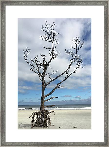 Talbot Stilt Tree #1 Framed Print