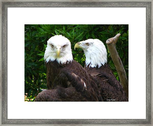 Talking To Me Framed Print by Greg Patzer