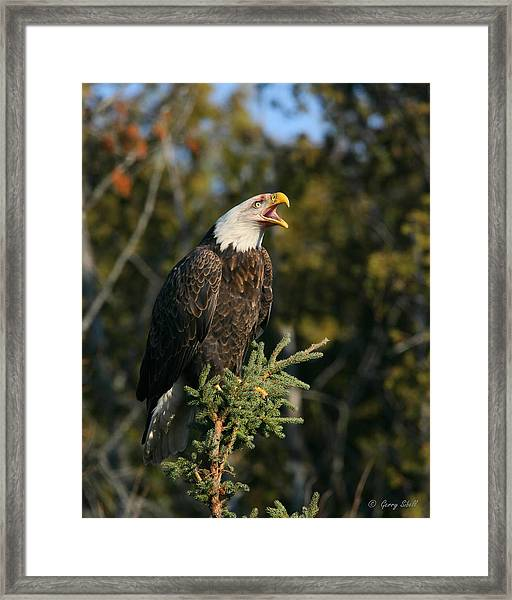 Talking Trash Framed Print