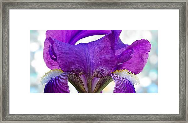 Tall, Bearded And Handsome - Iris Framed Print