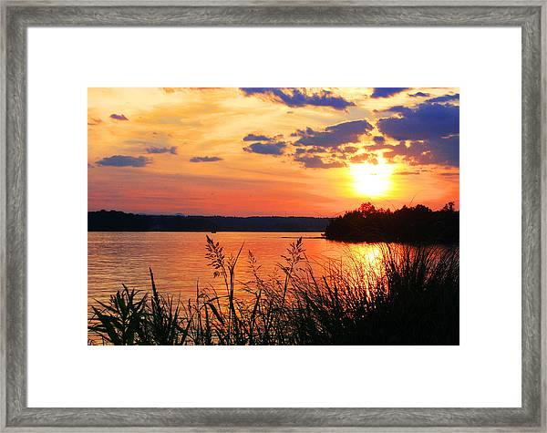 Tall Grass Sunset Smith Mountain Lake Framed Print
