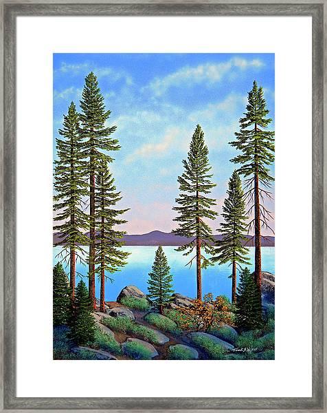 Tall Pines Of Lake Tahoe Framed Print