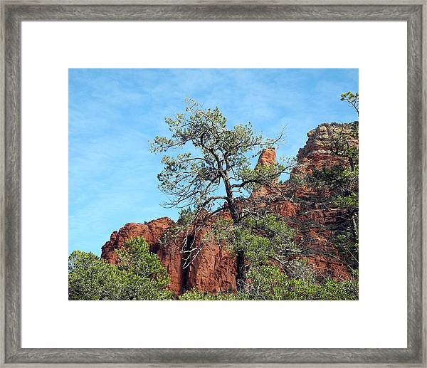 Tall Trees And Rocky Spires Framed Print