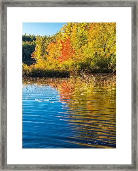 Tamworth 7881 Framed Print