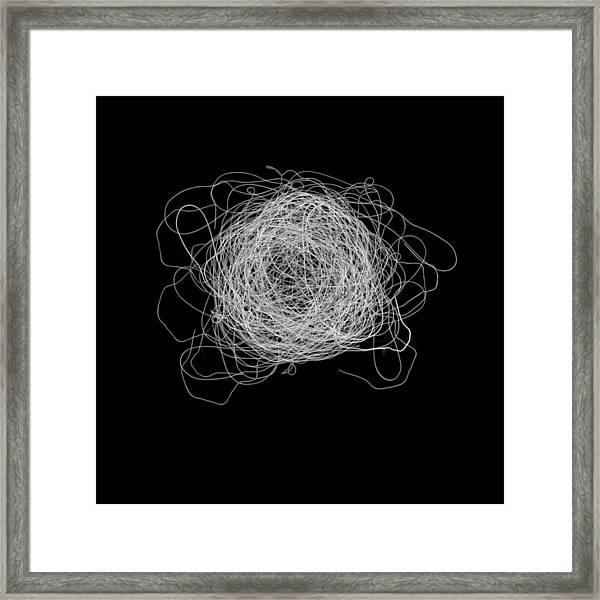 Tangled And Twisted Framed Print