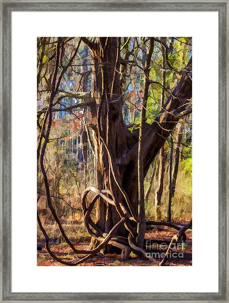 Tangled Vines On Tree Framed Print