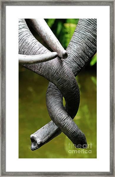 Tangled Trunks Framed Print