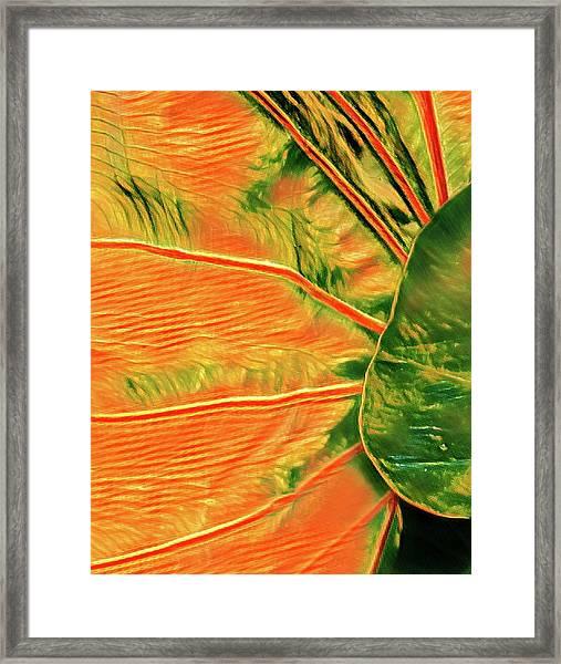 Taro Leaf In Orange - The Other Side Framed Print
