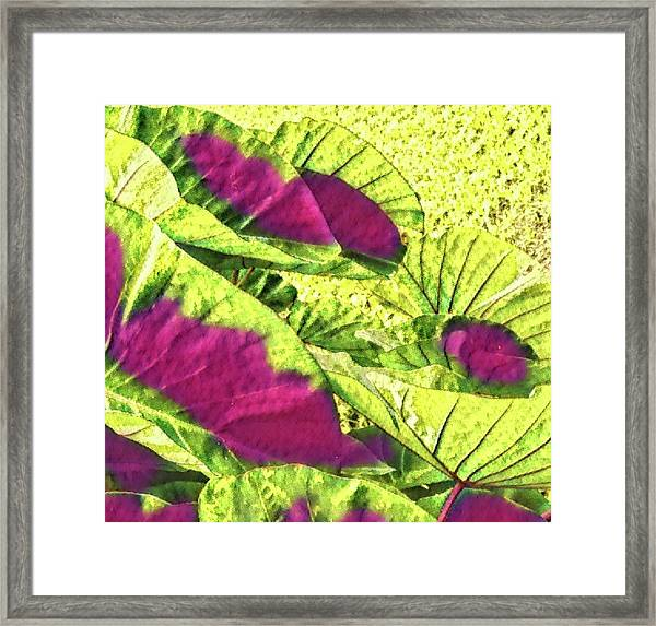 Taro Leaves In Green And Red Framed Print