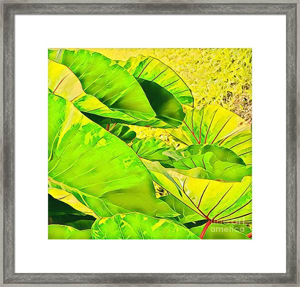 Taro Leaves In Green Framed Print