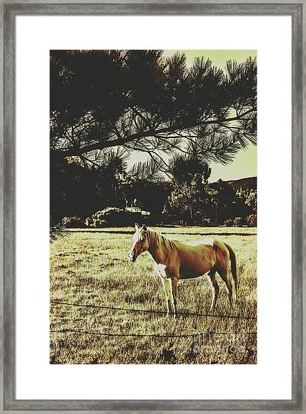 Tasmanian Rural Farm Horse Framed Print