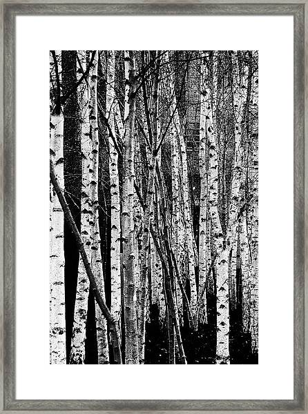 Tate Willows Framed Print