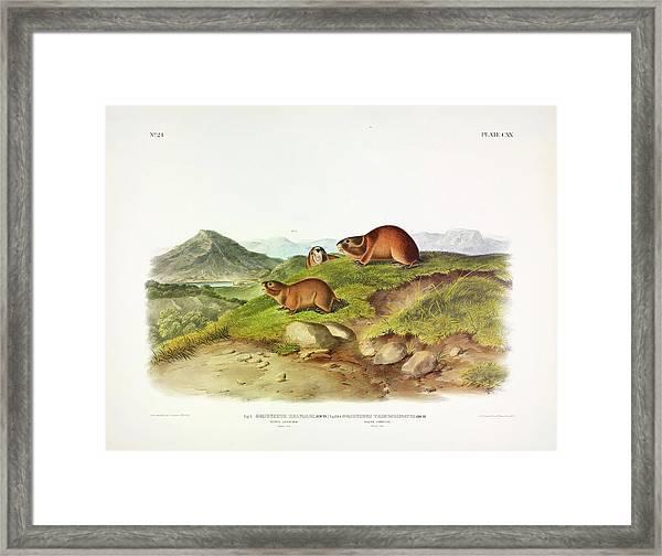 Tawny Leming Framed Print