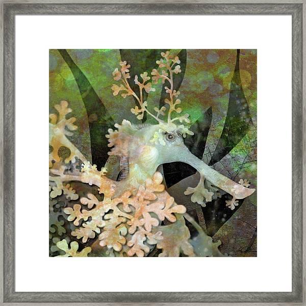 Teal Leafy Sea Dragon Framed Print