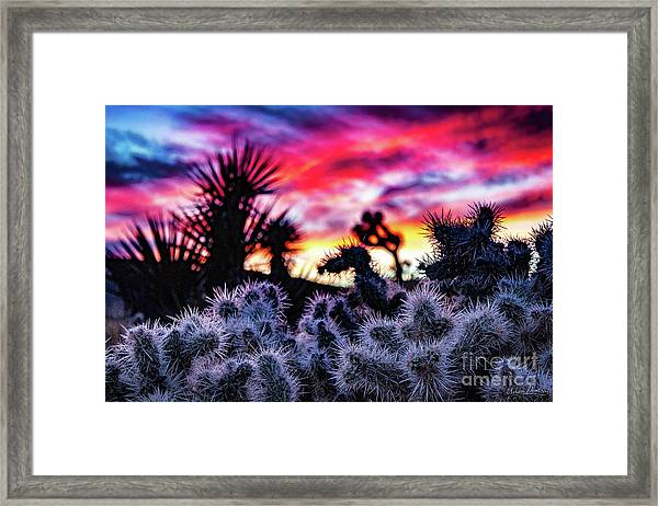 Teddy Bear Cholla Framed Print