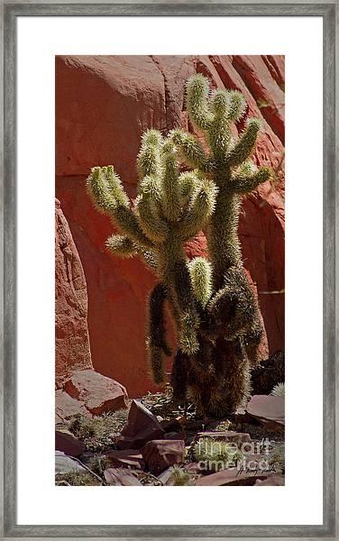 Teddybear Cholla Cactus-signed-#3322 Framed Print