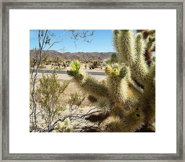Teddybear Cholla - Joshua Tree National Park Framed Print