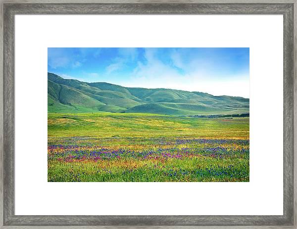 Tejon Ranch Wildflowers Framed Print