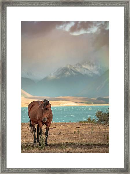 Framed Print featuring the photograph Tekapo Horse by Chris Cousins