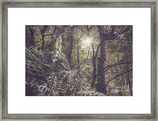 Temperate Rainforest Canopy Framed Print