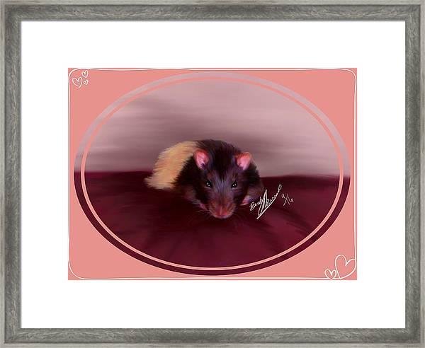 Templeton The Pet Fancy Rat Framed Print