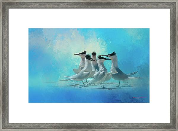 Tern And Look Framed Print