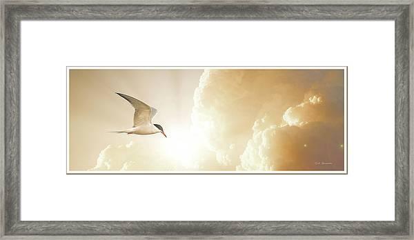Tern In Flight, Spiritual Light Of Dusk Framed Print