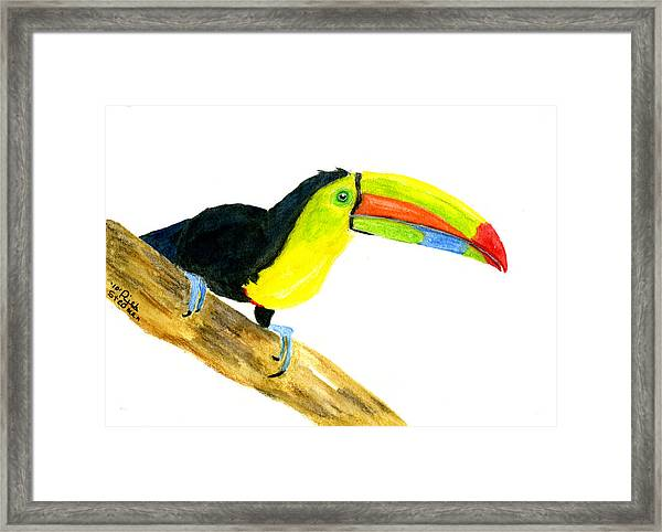 Terry Toucan Framed Print