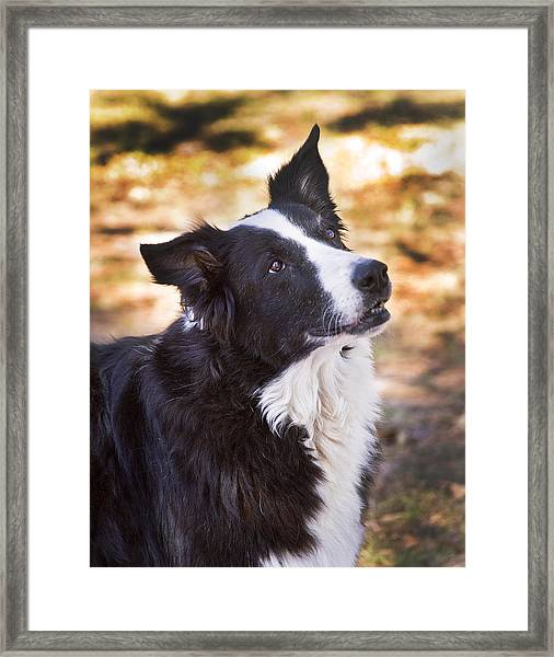 Tessie 8 Framed Print