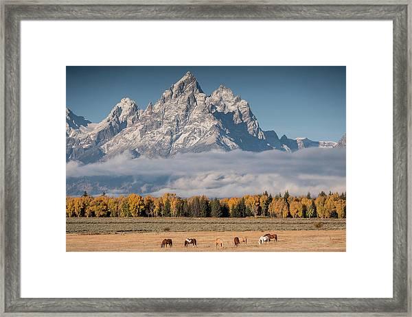 Teton Horses Framed Print
