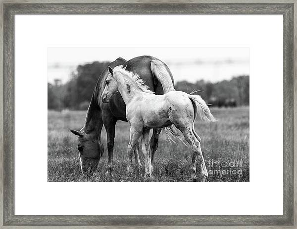 Texas Ranch  Framed Print