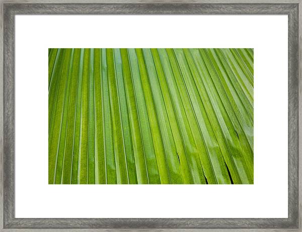 Texture 330 Framed Print