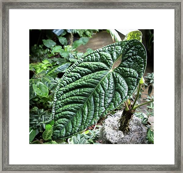 Texture Of A Leaf Framed Print