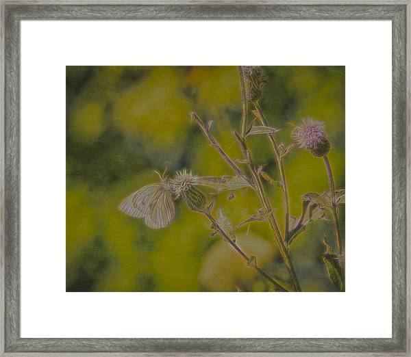 Textured Butterfly 1   Framed Print