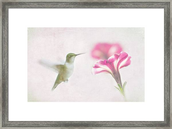 Textured Hummer Framed Print